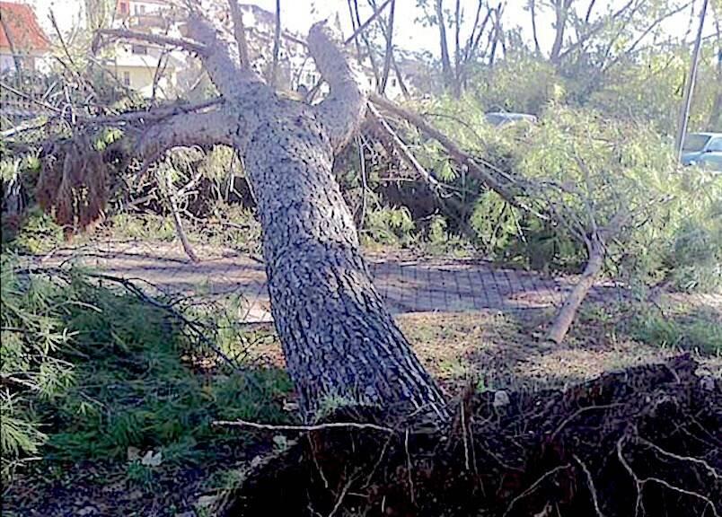 Uno degli alberi del parco Ugo Pisa