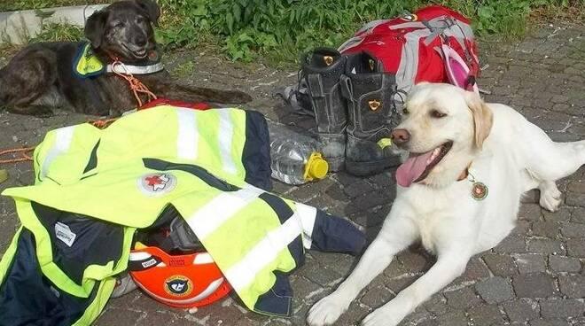 Nasce il Coordinamento Apuano per la Sicurezza Animale