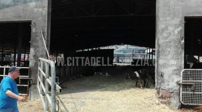 Le stalle della tenuta di Marinella