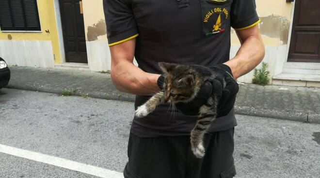 Il gattino salvato dai vigili