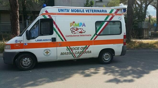 """L'ambulanza veterinaria """"Pimpa"""""""