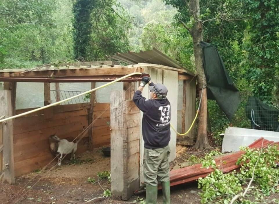 Distrutto il Canile Rifugio di Montepepe