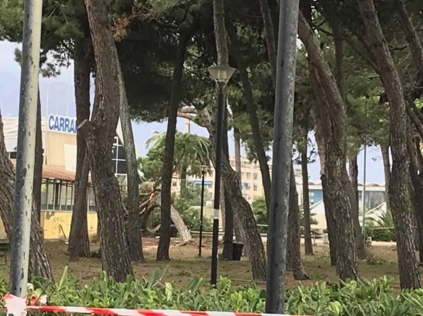 Pineta Paradiso Marina di Carrara