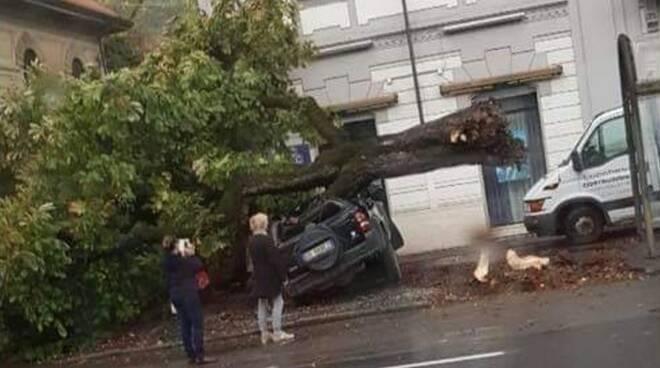 Albero crollato, auto distrutta a Fossola (Carrara)