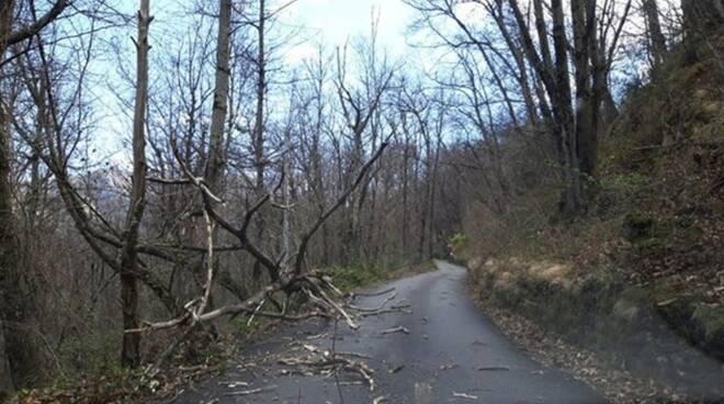 Il vento fa danni tra alberi caduti, auto danneggiate e un incendio