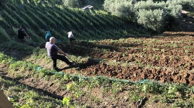 Viticoltura eroica sulle colline del Candia