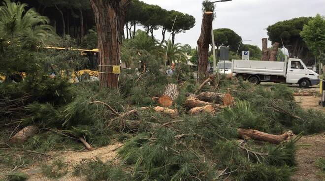Abbattimento pini in viale Colombo: il sit-in di protesta