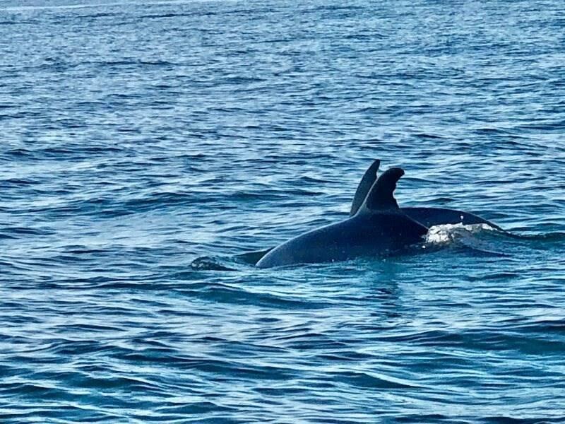 Rientra da Porto Venere e si imbatte in un gruppo di delfini