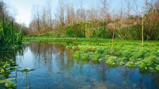 Il Lago di Porta