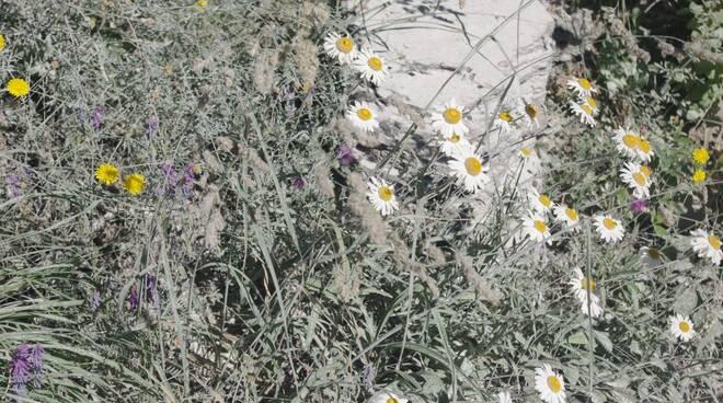 In difesa delle Apuane, flora ricoperta di polvere di marmo