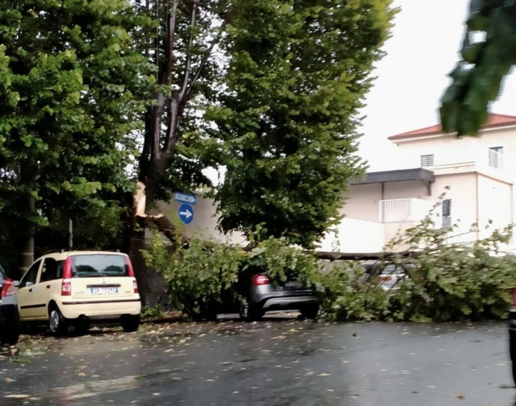 Mezzo albero crollato nel pomeriggio del 24 luglio 2020 su un'auto alla stazione di Avenza