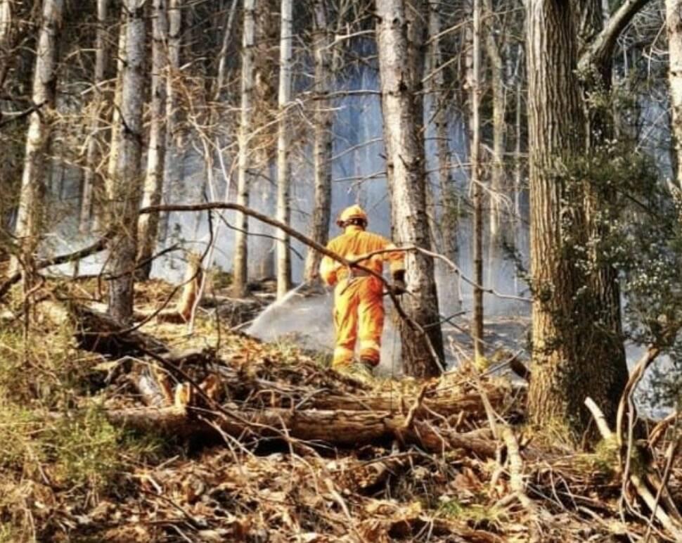 Un volontario della Vab nel bosco di Luscignano (Casola in Lunigiana)