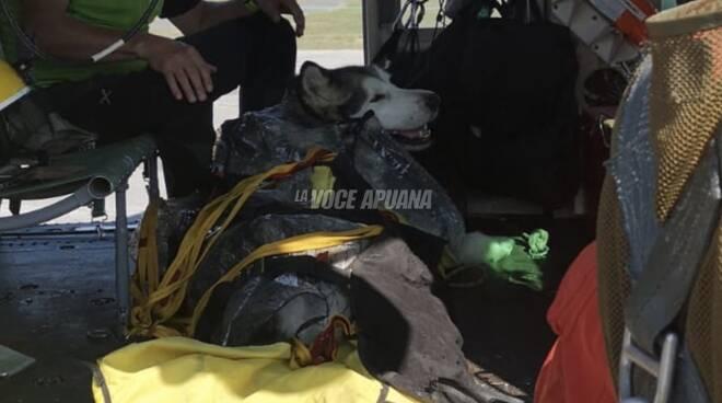 Aki, l'husky soccorso da Vigili del Fuoco e Croce Oro