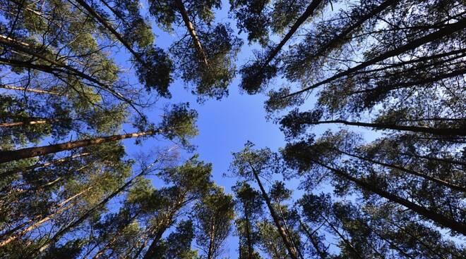 Alberi, albero, verde, rami, foglie