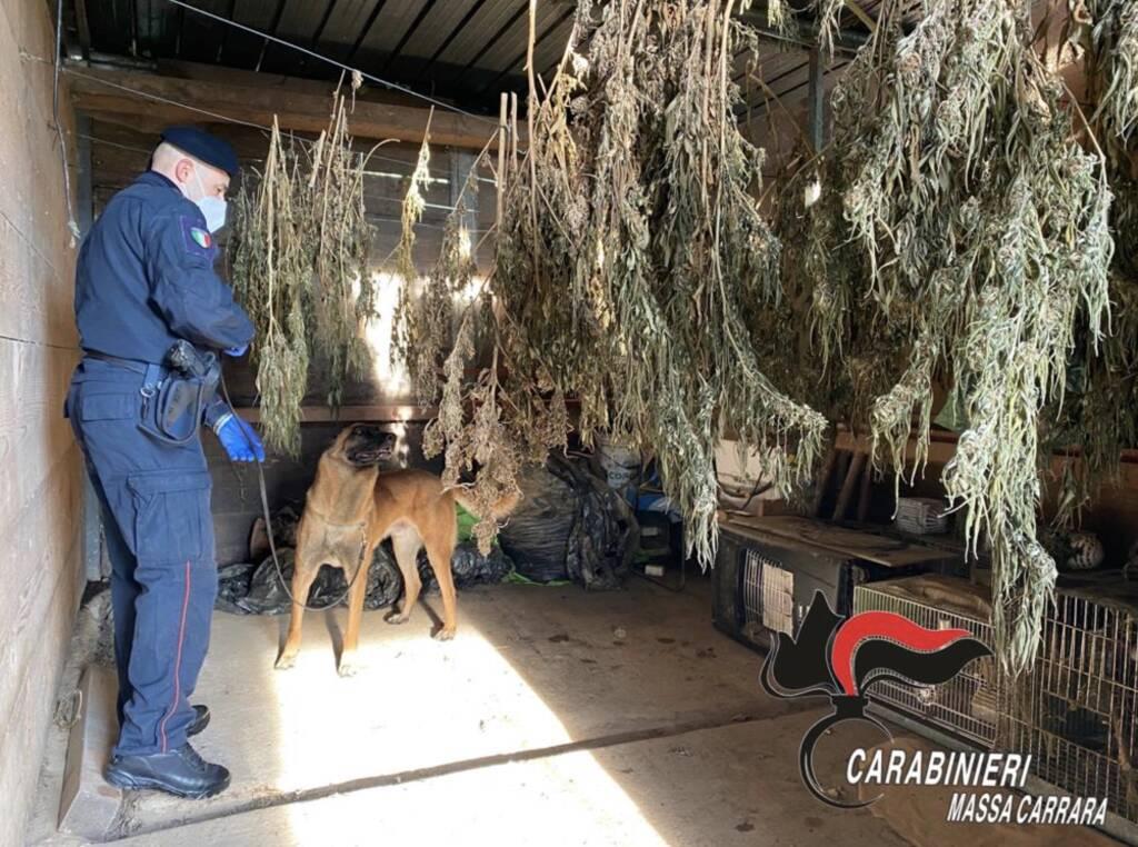 Carabinieri munizioni carabinieri marijuana