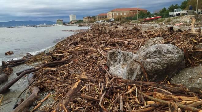 Tonnellate di materiale legnoso nel canale Ricortola portato dalla mareggiata