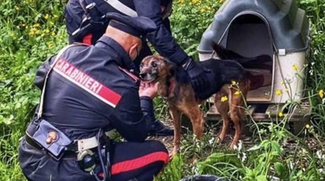 carabinieri cane