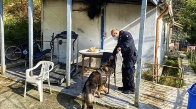 carabinieri cane ficola