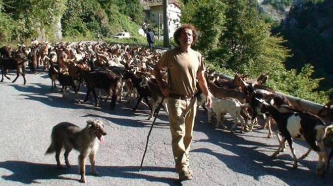 capre, gregge, pastore, cane pastore